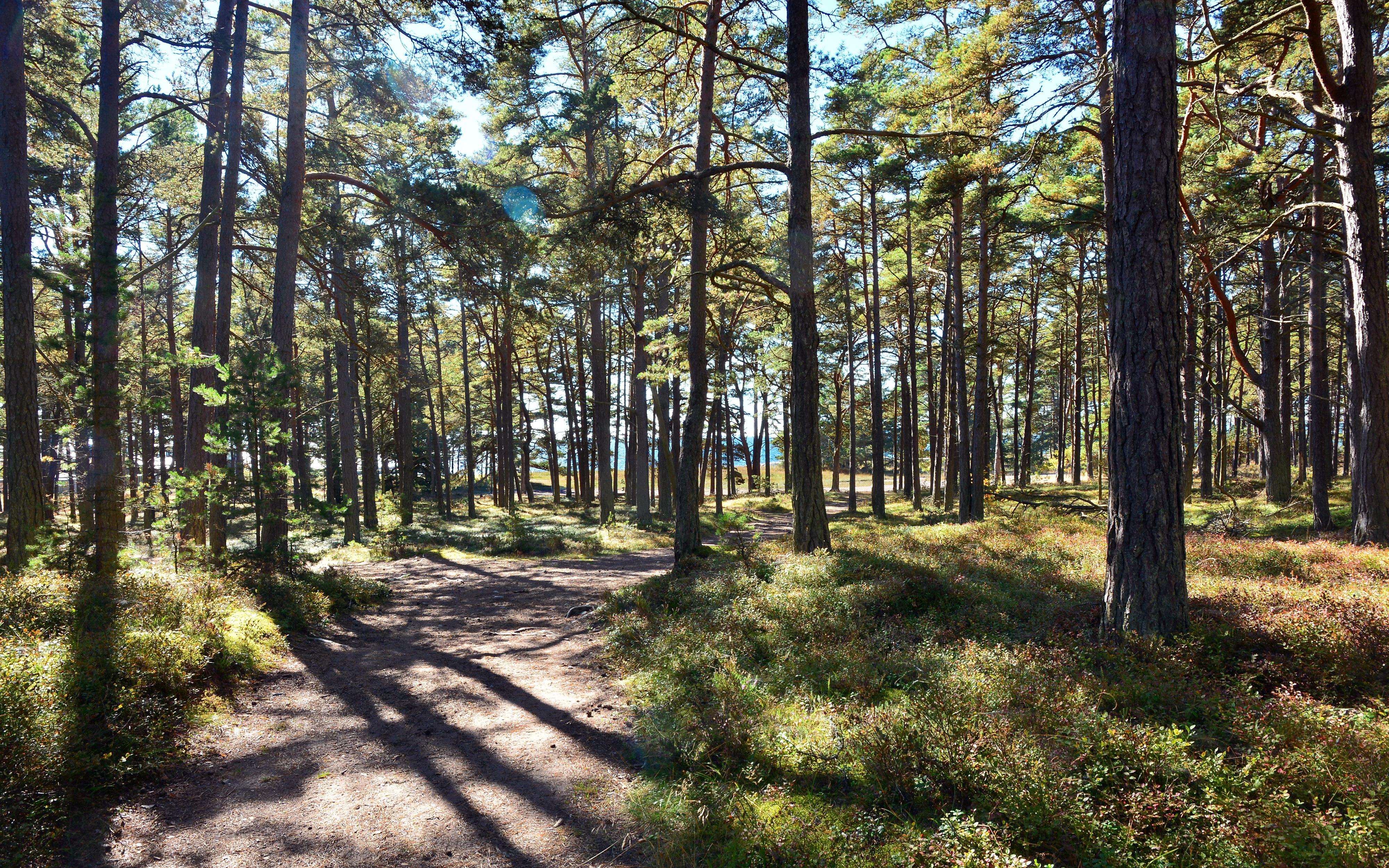 Elmia skog -15 - Kranman