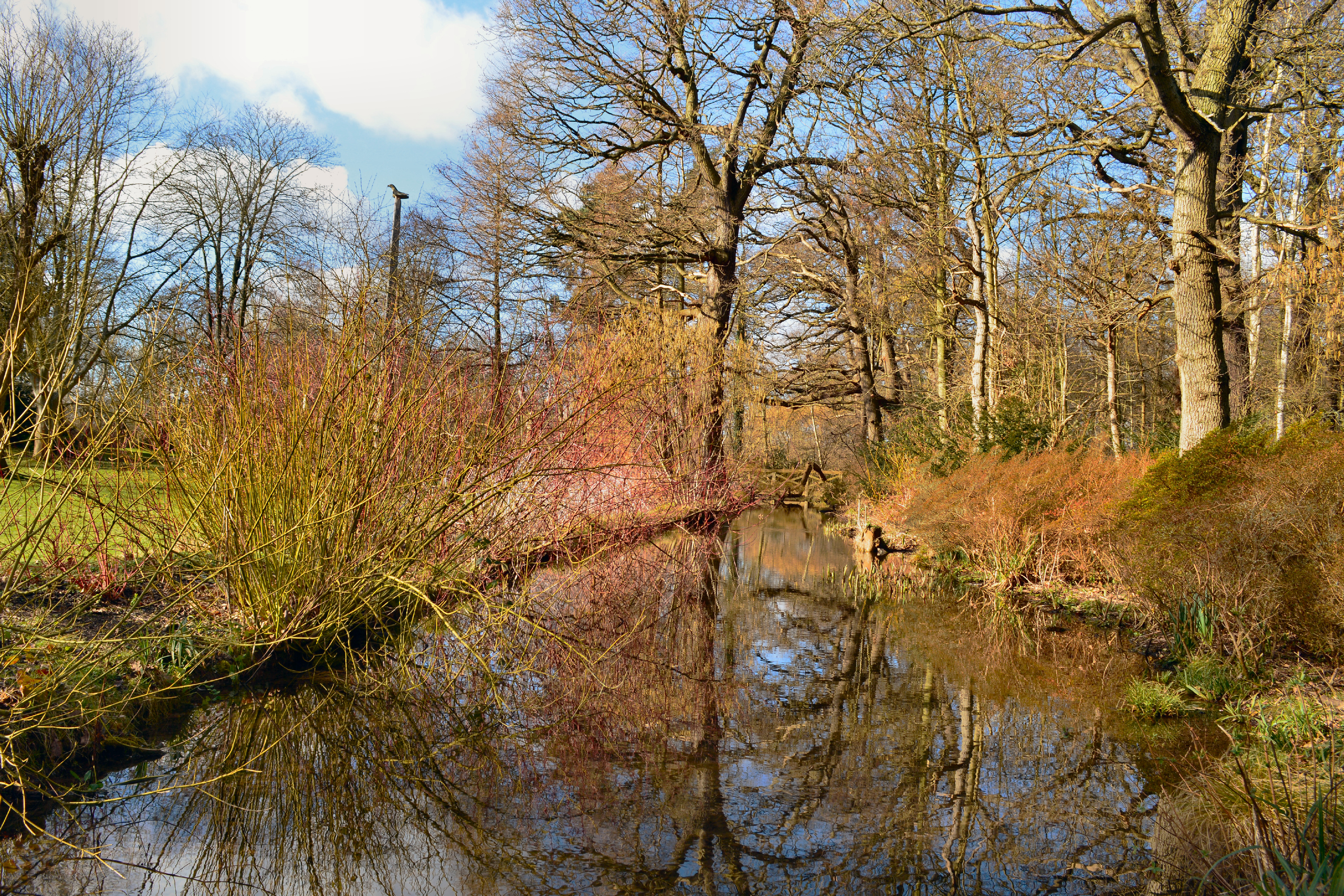 File:The Canadian Glade, Waterhouse Woodland Garden.jpg - Wikimedia ...