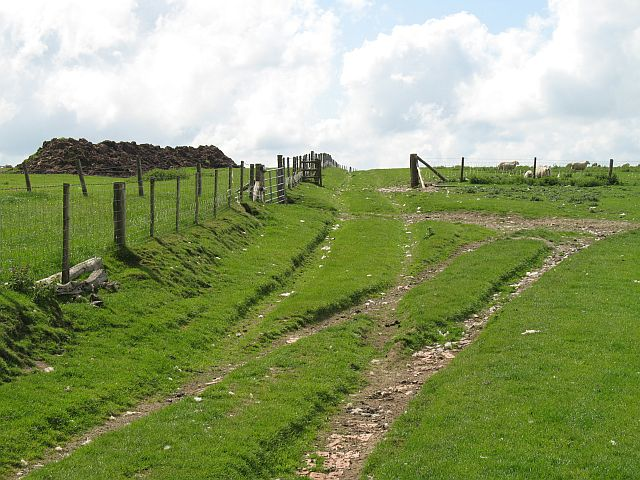 Track on the Radnor Forest - geograph.org.uk - 837990