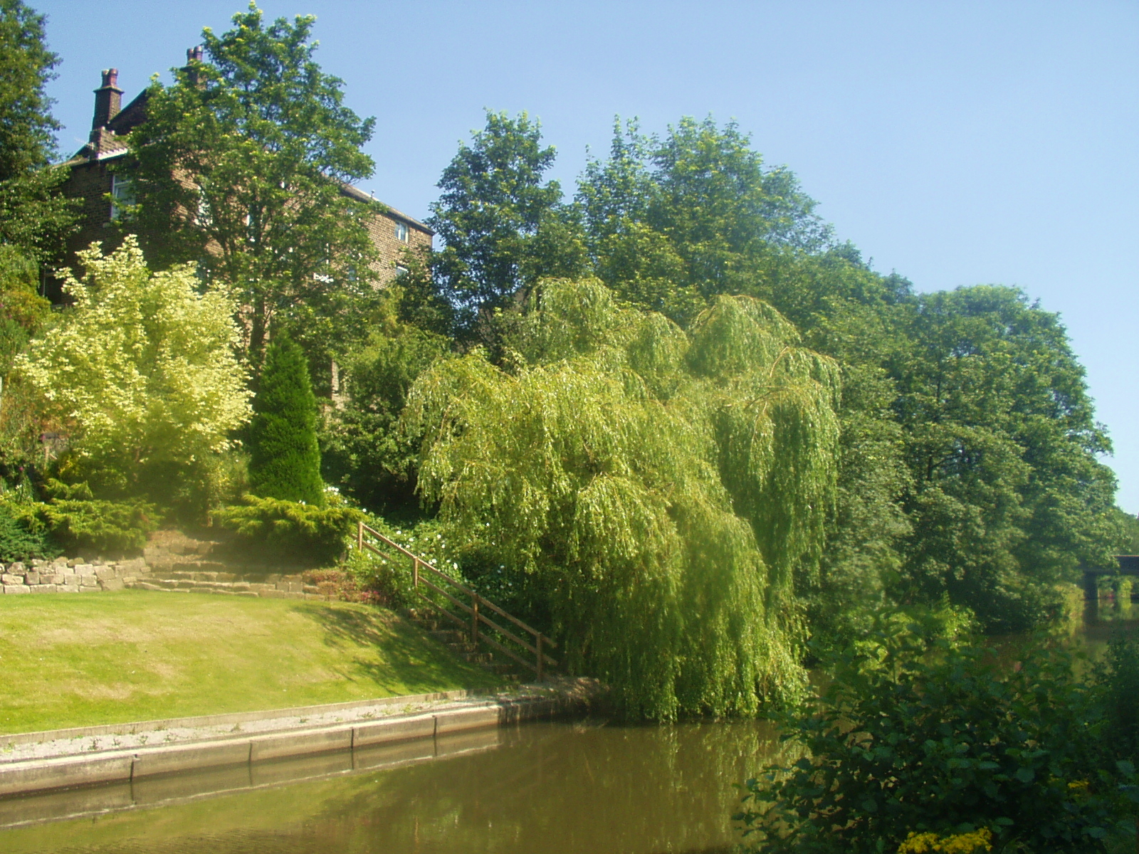 The willow tree by the Rochdale canal, near Hebden Bridge.