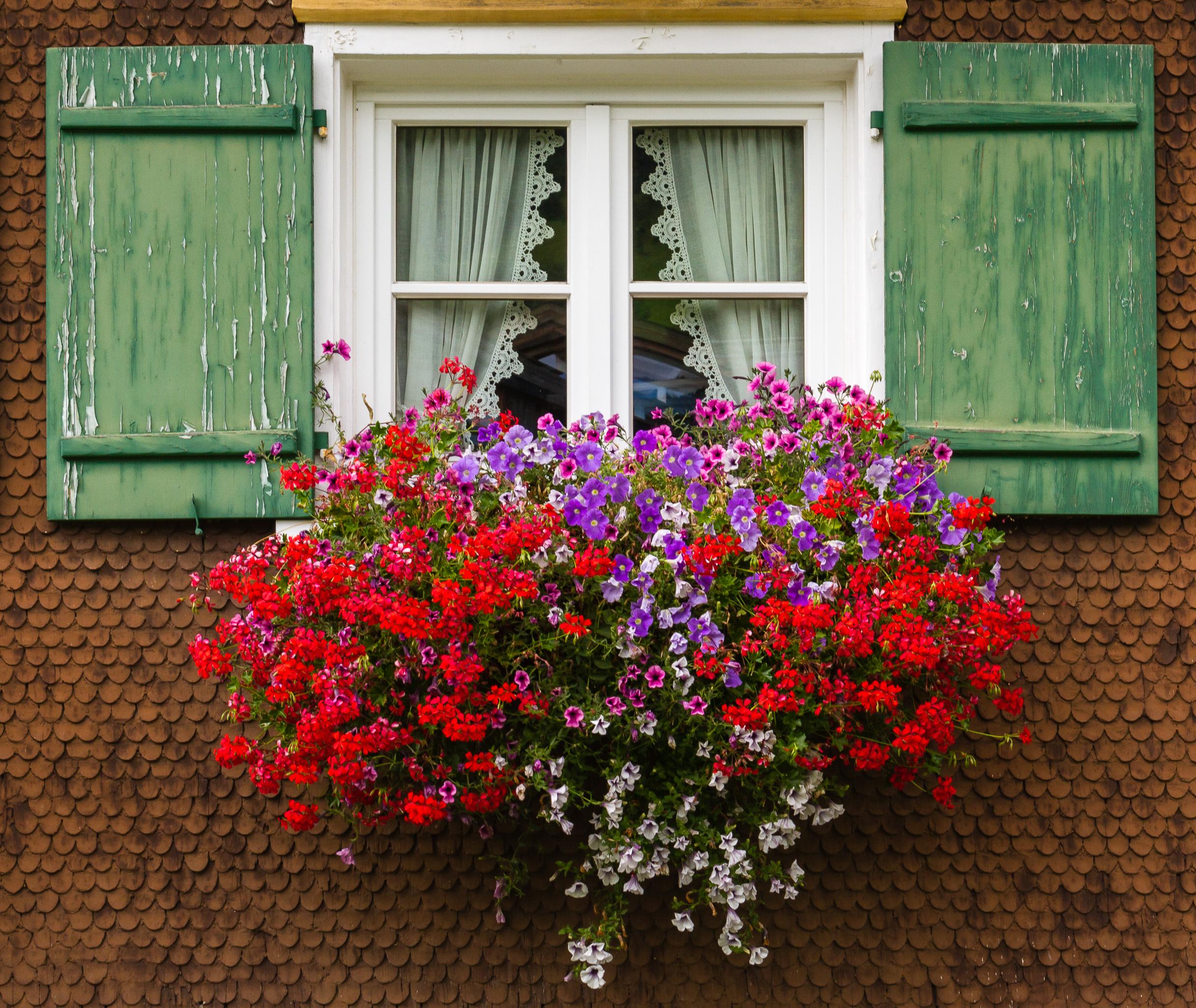 File 2013 09 18 002 Fenster Mit Blumenkasten Jpg Wikimedia Commons