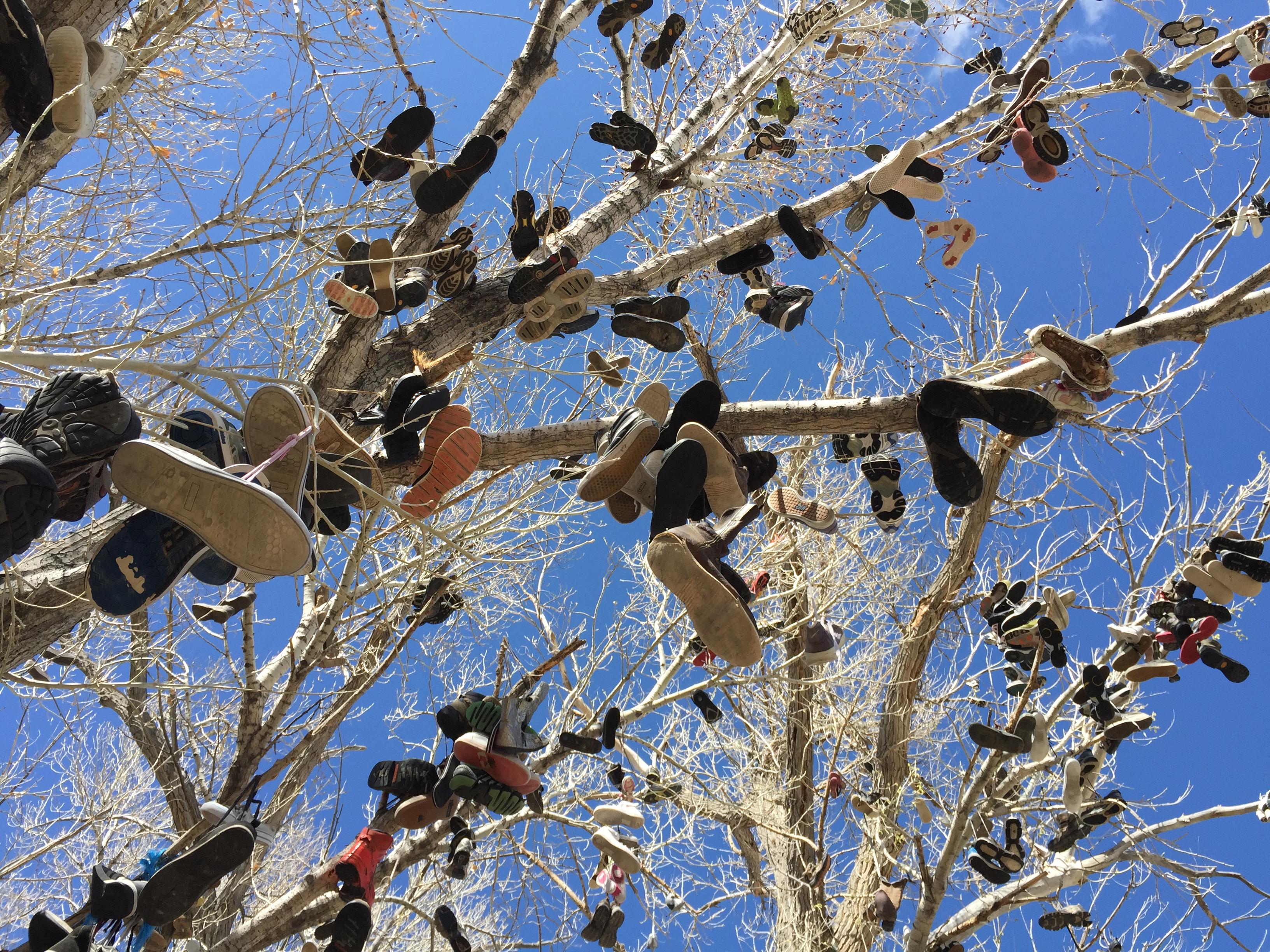 New Shoe Tree Dust