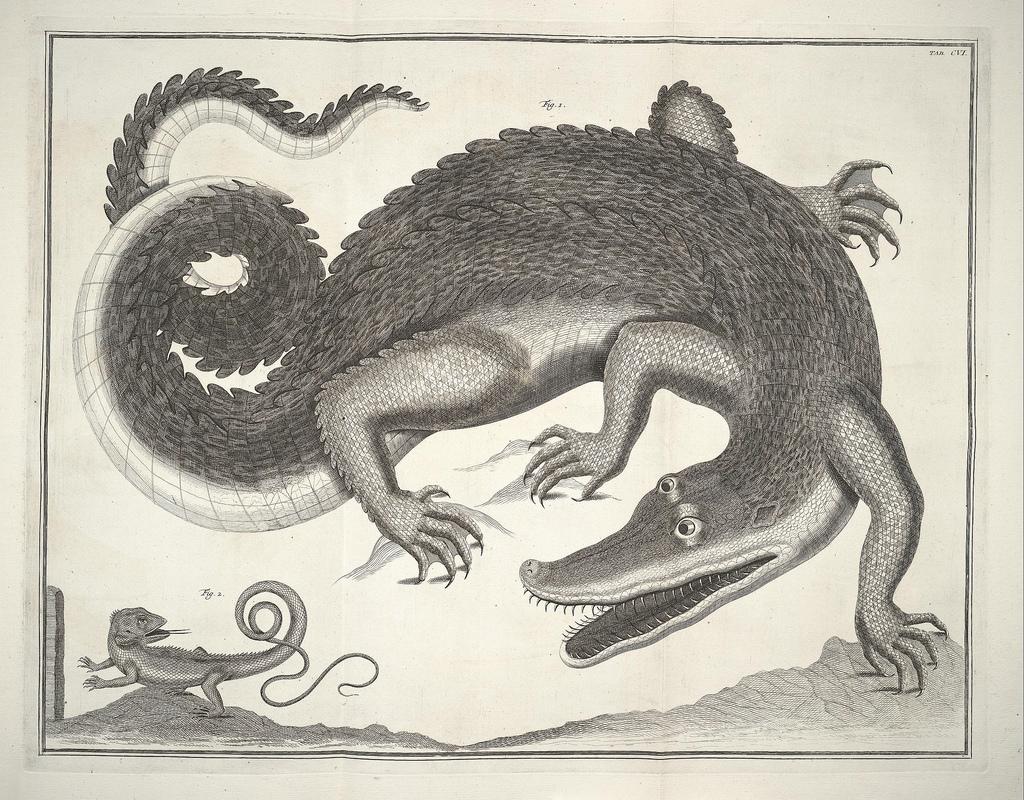 File:Albertus Seba Thesaurus Tab. CVI