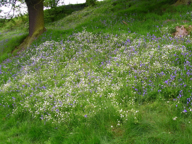 Filebank of spring flowers by the river derwent geograph filebank of spring flowers by the river derwent geograph mightylinksfo Choice Image