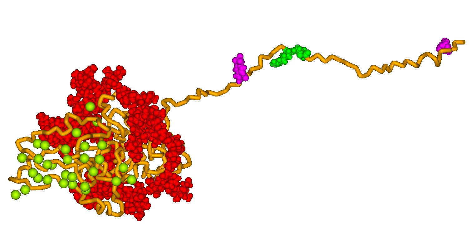Bone sialoprotein - Wikipedia