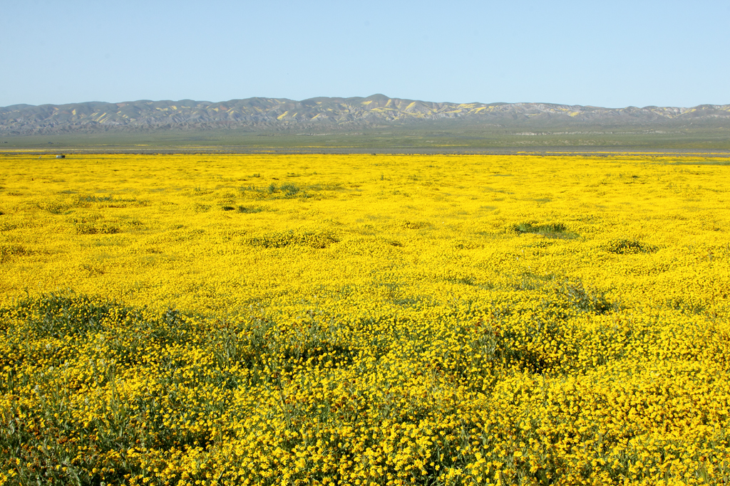 File:Carizzo plain spring flowers in bloom 6.jpg - Wikimedia Commons