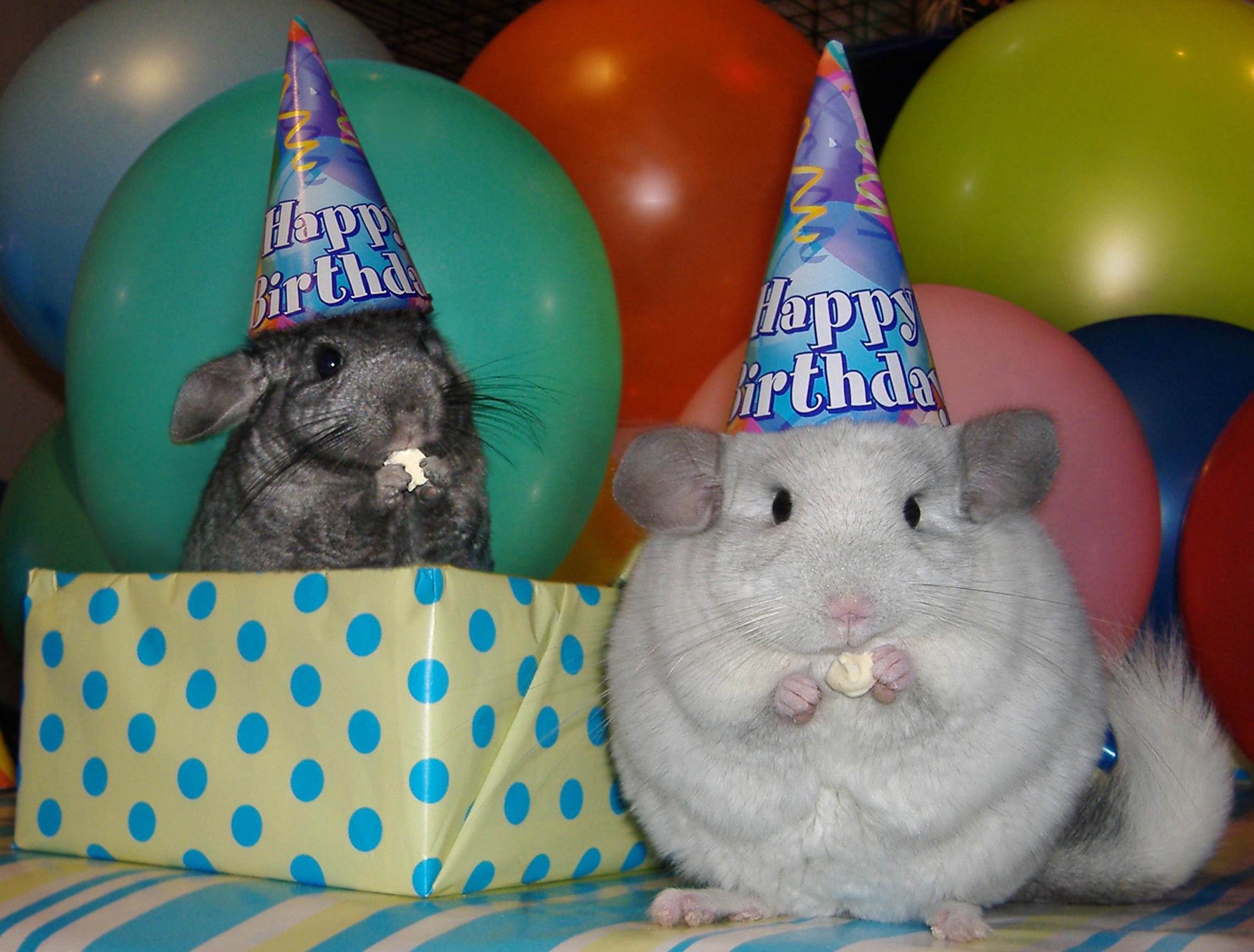 С днем рождения картинки прикольные с животными, днем