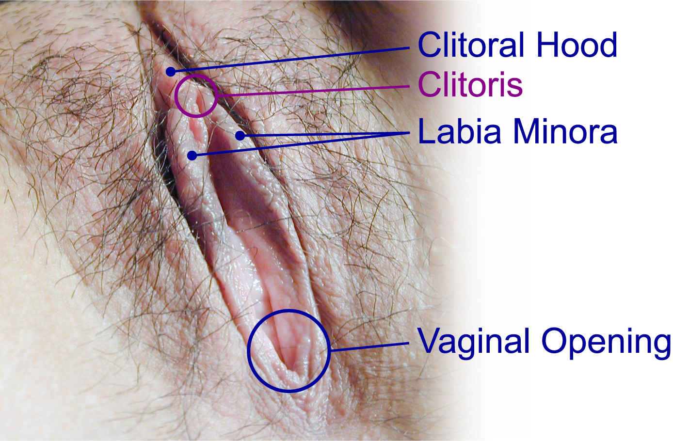 pictures of clitoris