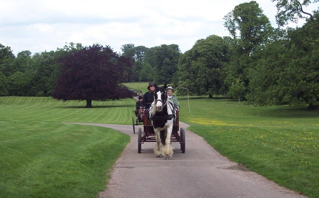 Coming up the drive to Kingston Lacy House - geograph.org.uk - 439544
