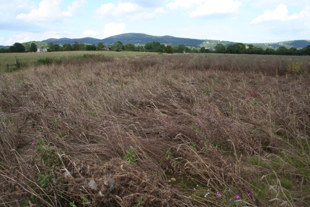 https://upload.wikimedia.org/wikipedia/commons/0/08/Crop_Damage_near_the_Cradley_Brook_-_geograph.org.uk_-_513937.jpg
