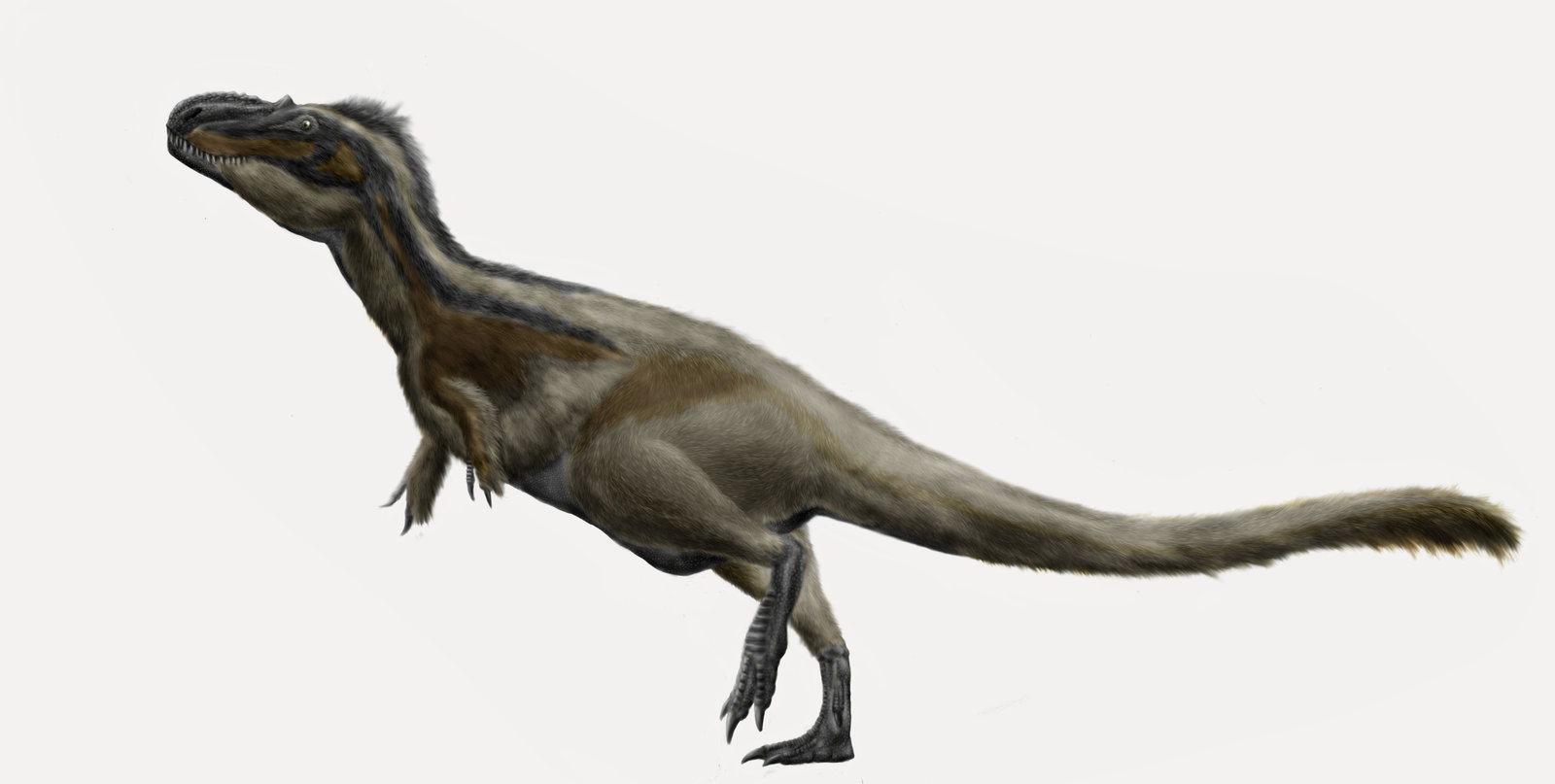 https://upload.wikimedia.org/wikipedia/commons/0/08/Daspletosaurus_torosus_by_durbed.jpg