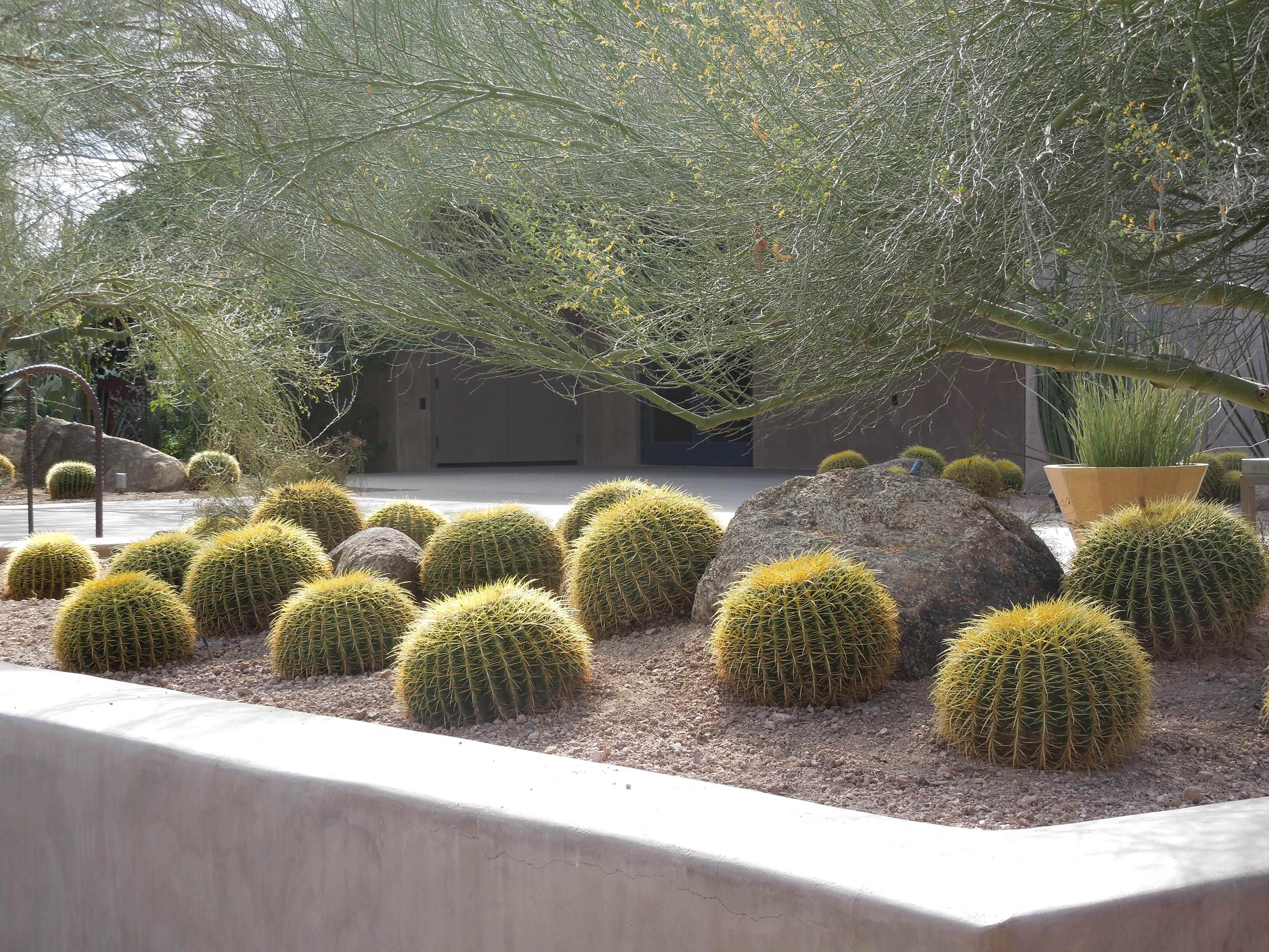 File Desert Botanical Garden Phoenix Arizona 45 Jpg