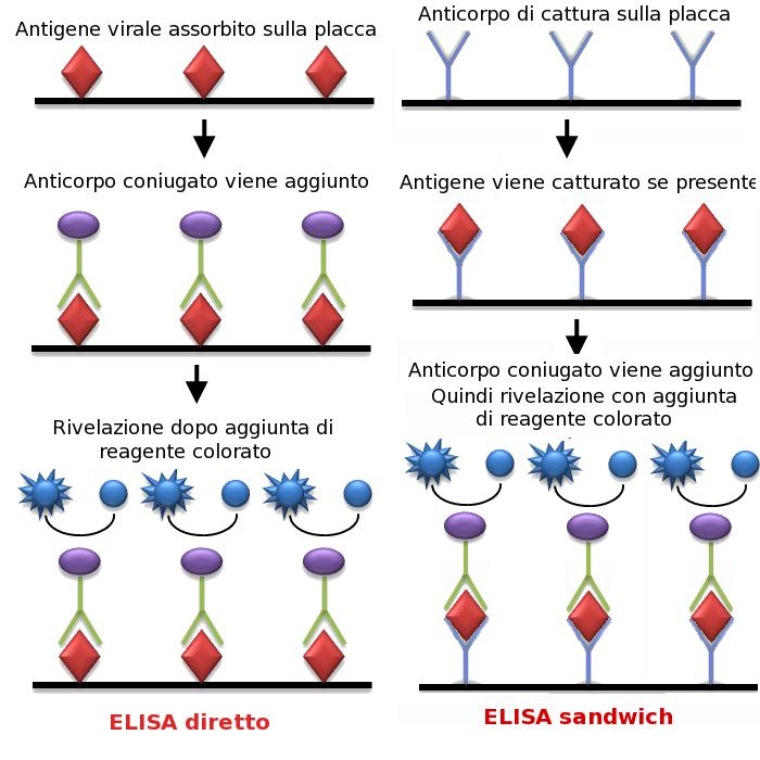 diagram of radioimmunoassay