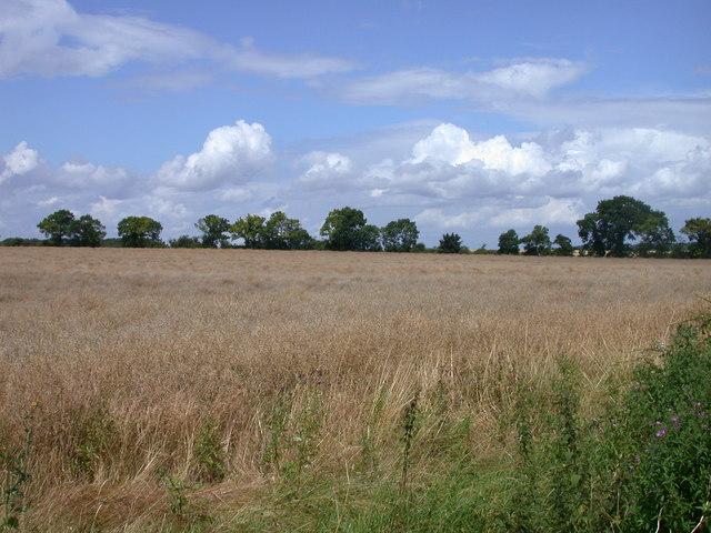 Field beside Clopton Way - geograph.org.uk - 834432