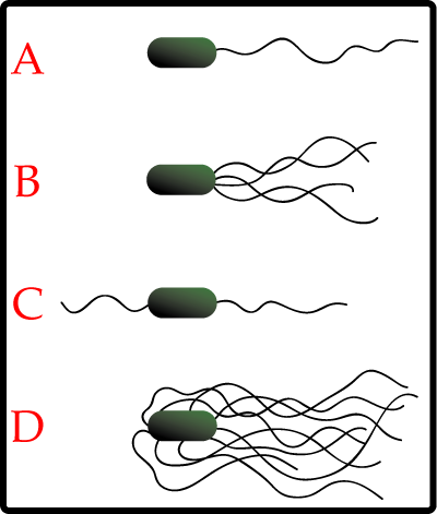 Arrangements of Flagella