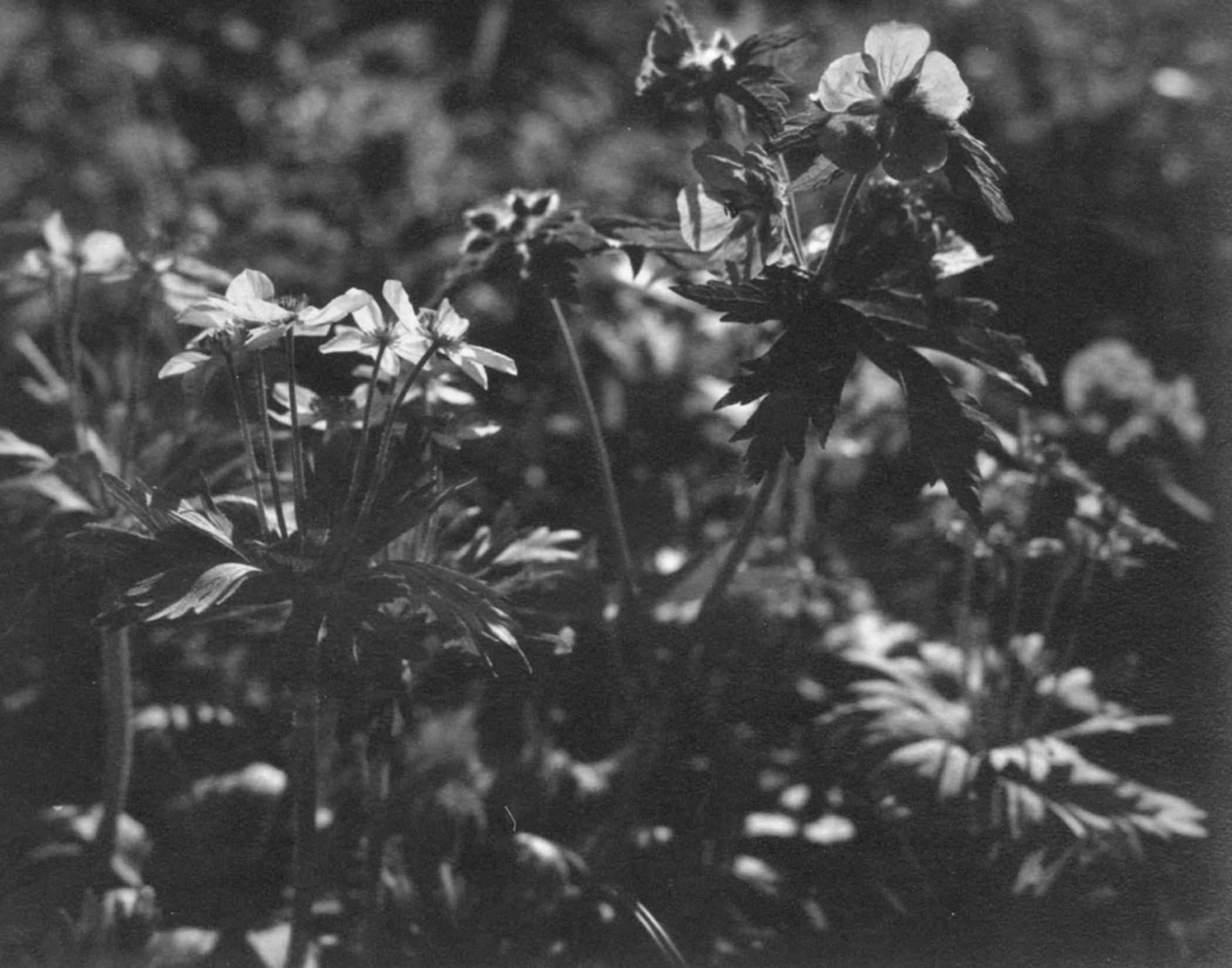 Vintage Photo Of Grass