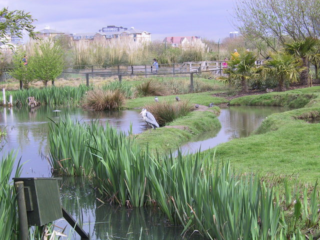 Grey Heron in London Wetlands Centre - geograph.org.uk - 795424