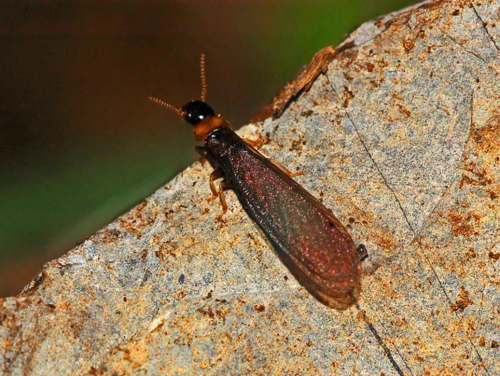 Termite Guide  How to Kill Termites