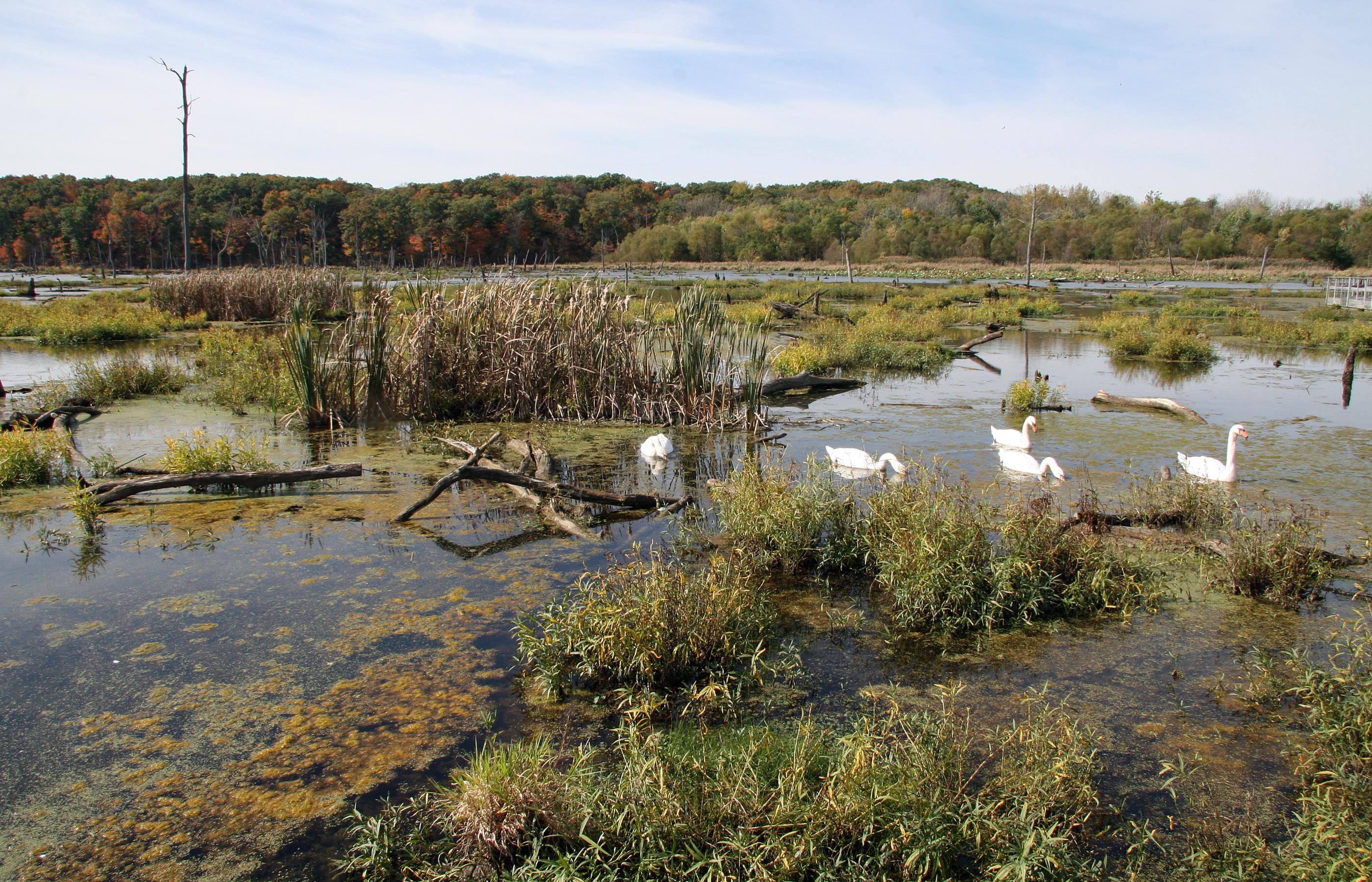 File Kennekuk Marshes, Lake Vermilion, Illinois png   Wikimedia Commons