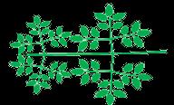 Composition des folioles, tripennée, Pennée trois fois (chaque foliole étant elle-même imparipennée)