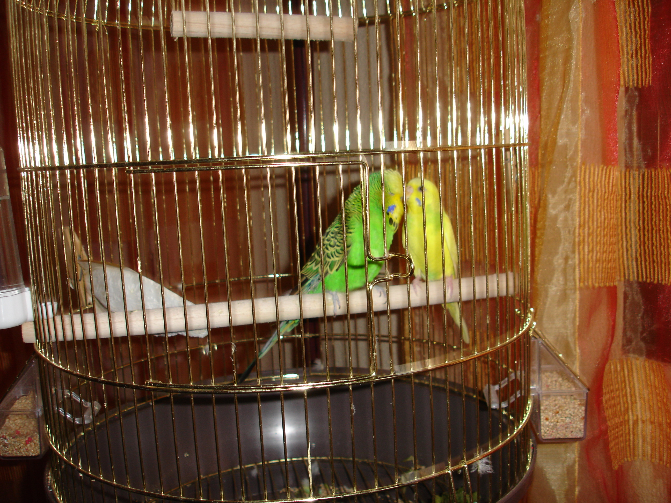 Ways To Keep Your Pet Birds Warm In Winter Coops Amp Cages