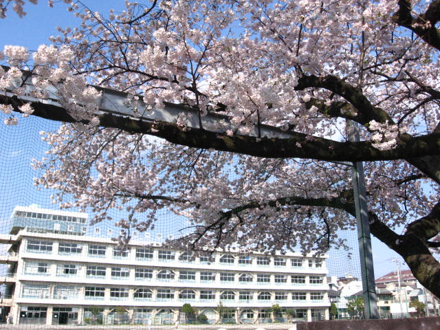 File:Musashino 1st Junior High-School.jpg