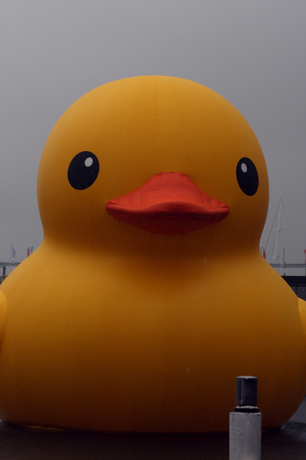 File:Rubber Duck (8374801497).jpg - Wikimedia Commons