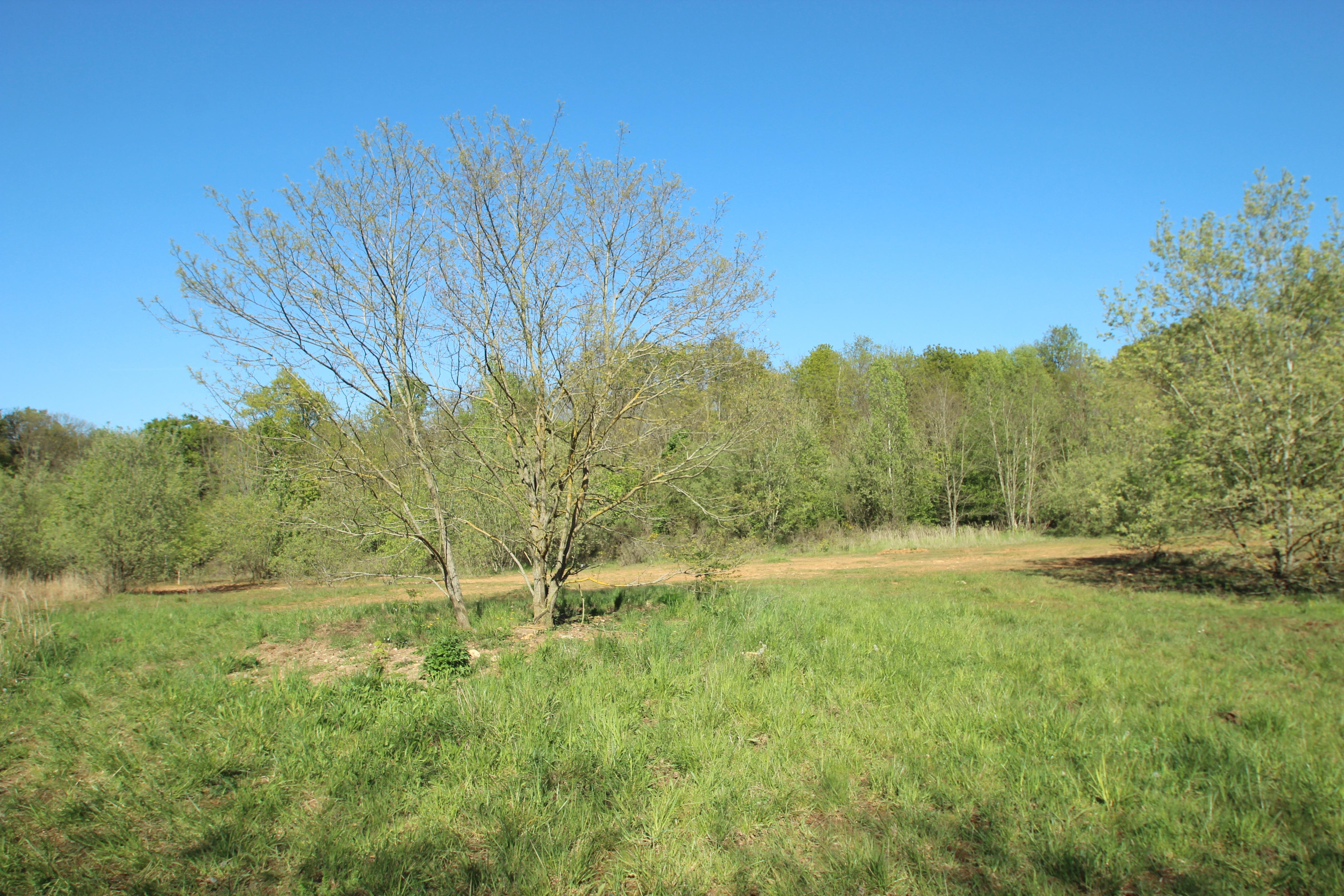 Bois De La Saulx file:sablière du bois de lunezy à saulx-les-chartreux le 4