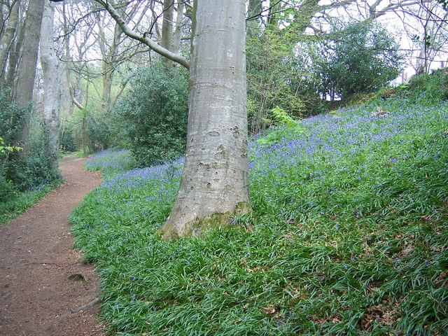 Spring in Wayford Wood - geograph.org.uk - 450690