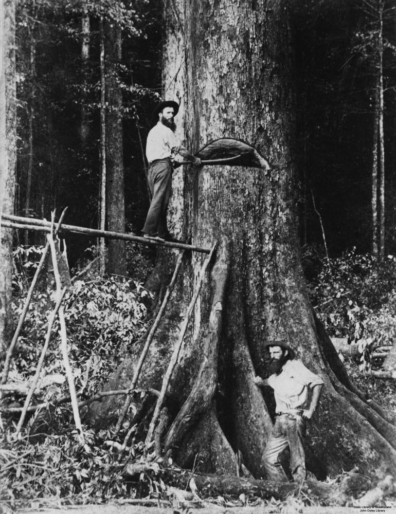 StateLibQld 1 89188 Two timber workers felling a tree on the Atherton Tableland, 1890-1900.jpg