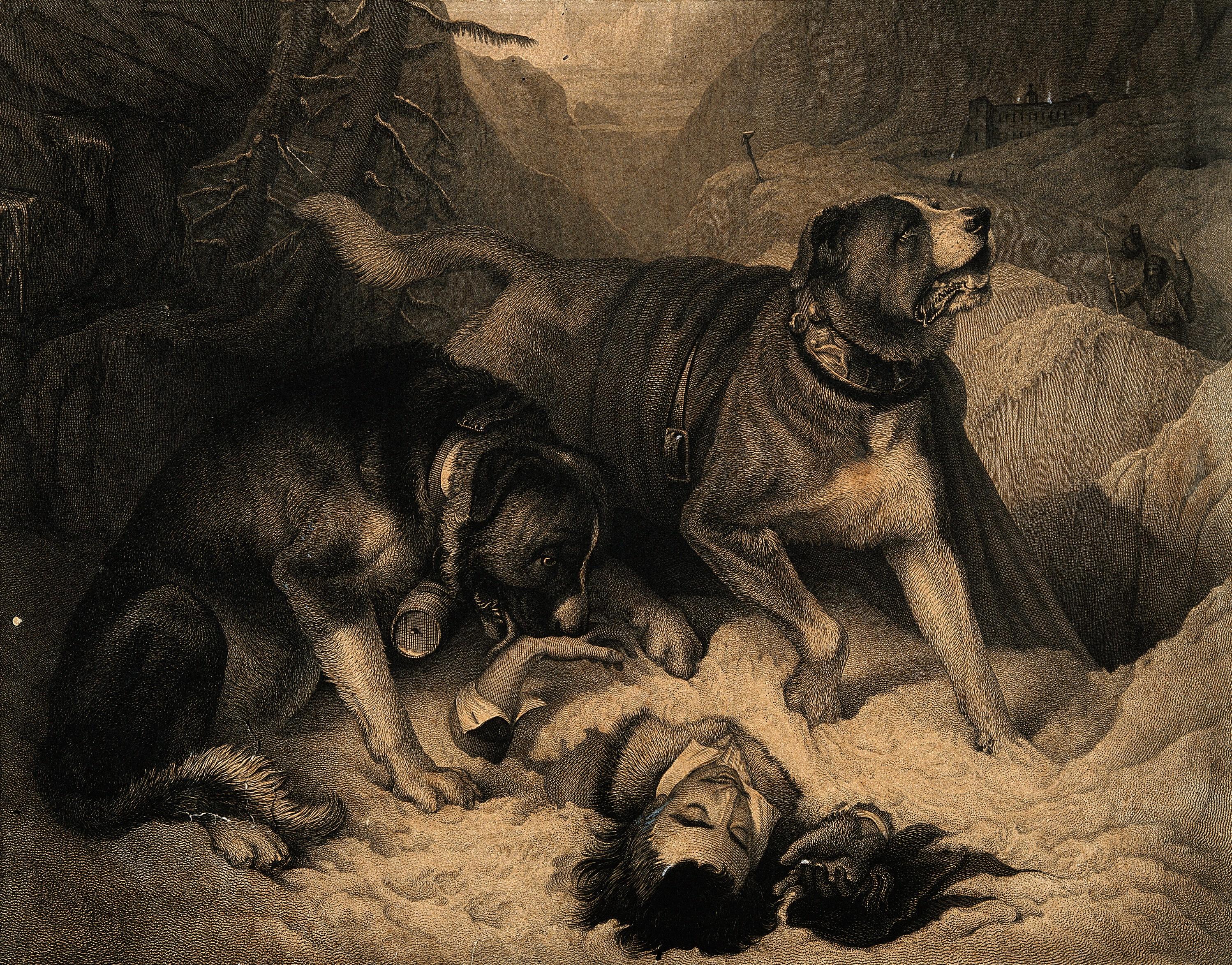 Dog Treat Silhoette