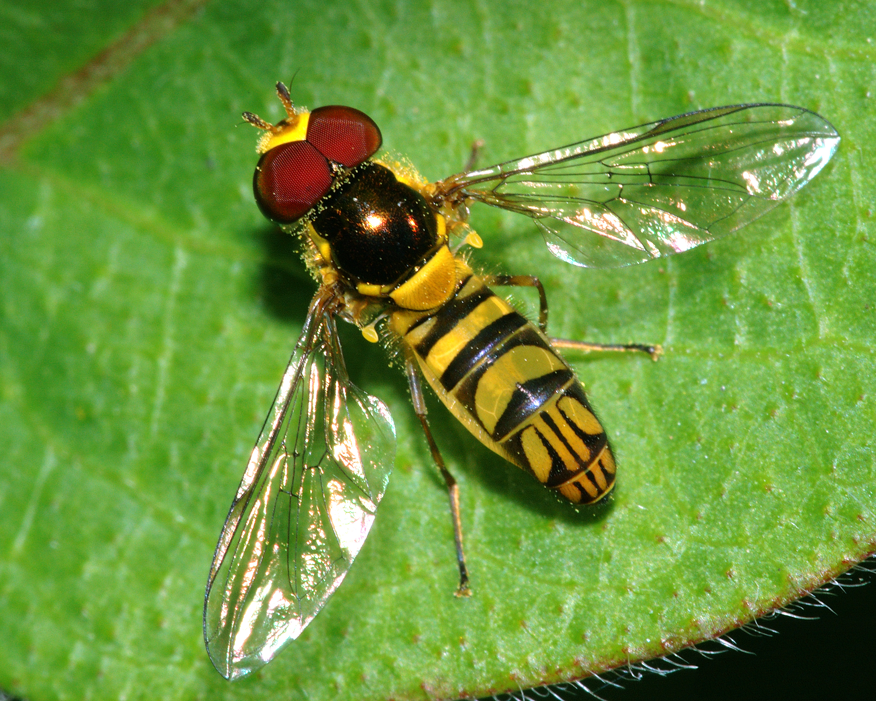 how to avoid flies outdoors