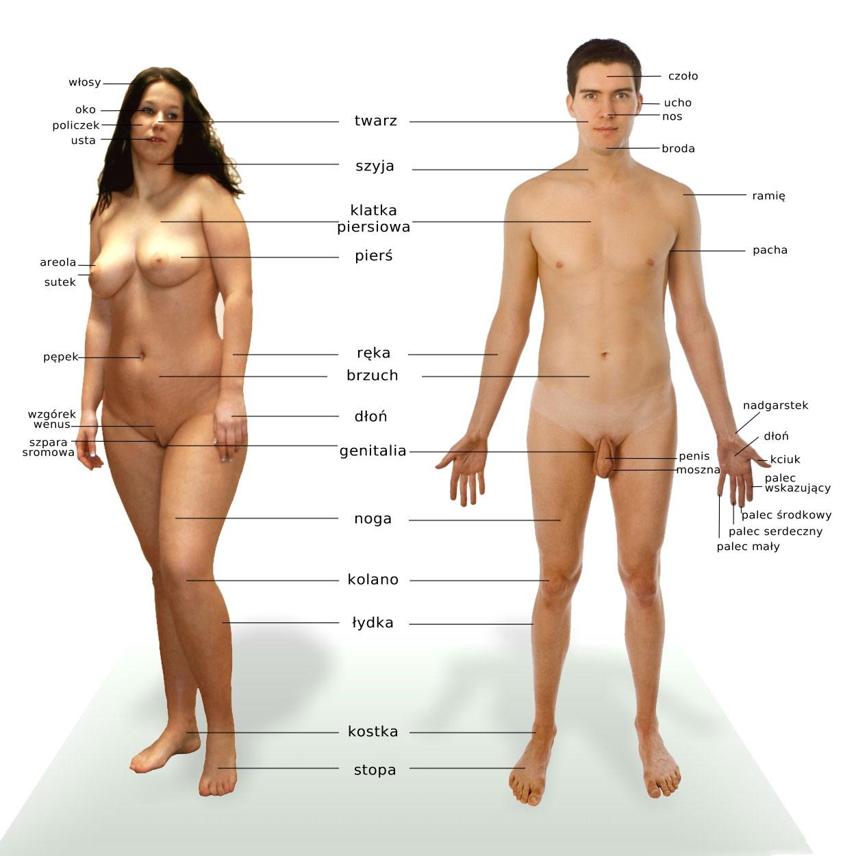 Признаки определяющие глубину влагалища у женщин 9 фотография