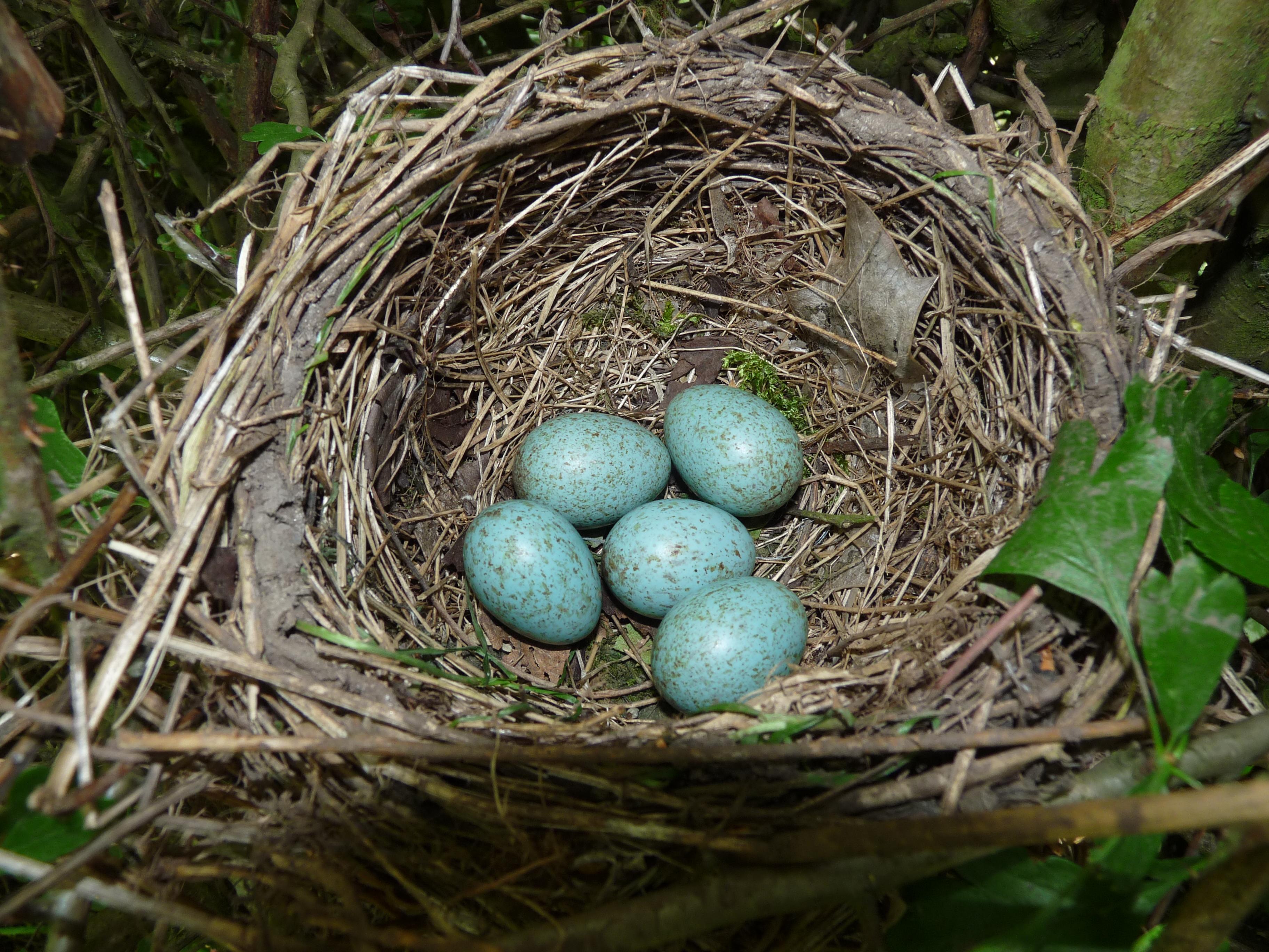 Nest history report uk