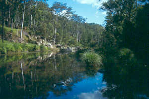 Carnarvon Creek and Carnarvon Gorge, Carnarvon National Park. Photo: Dhum Dhum/Wikimedia Commons