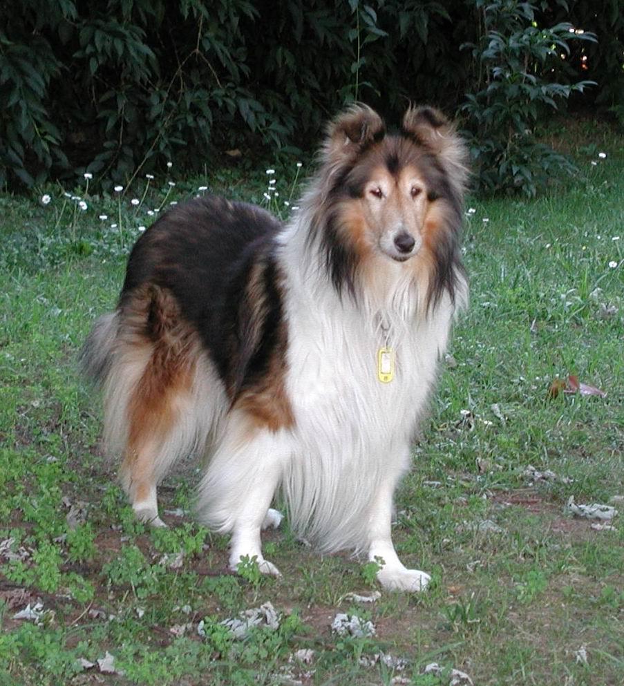 Dog Grooming River Road Eutene
