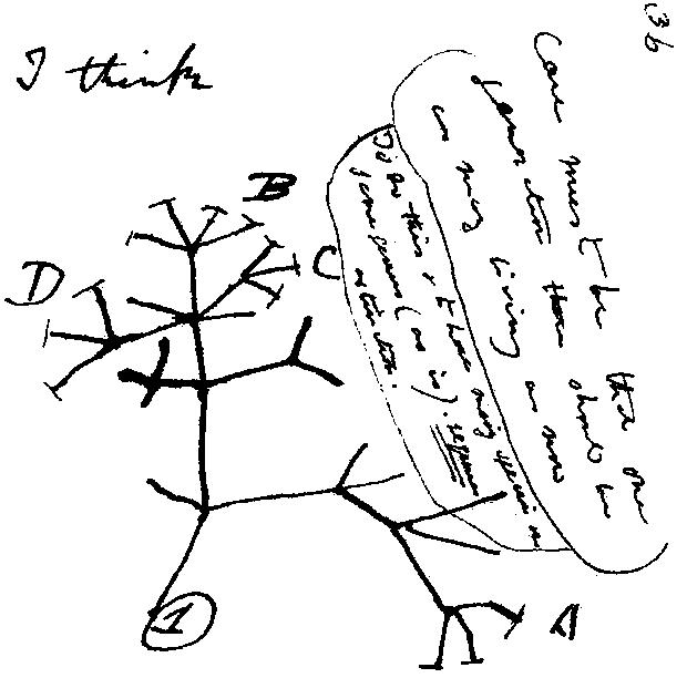 Tree Diagram by Charles Darwin [Public domain], via Wikimedia Commons