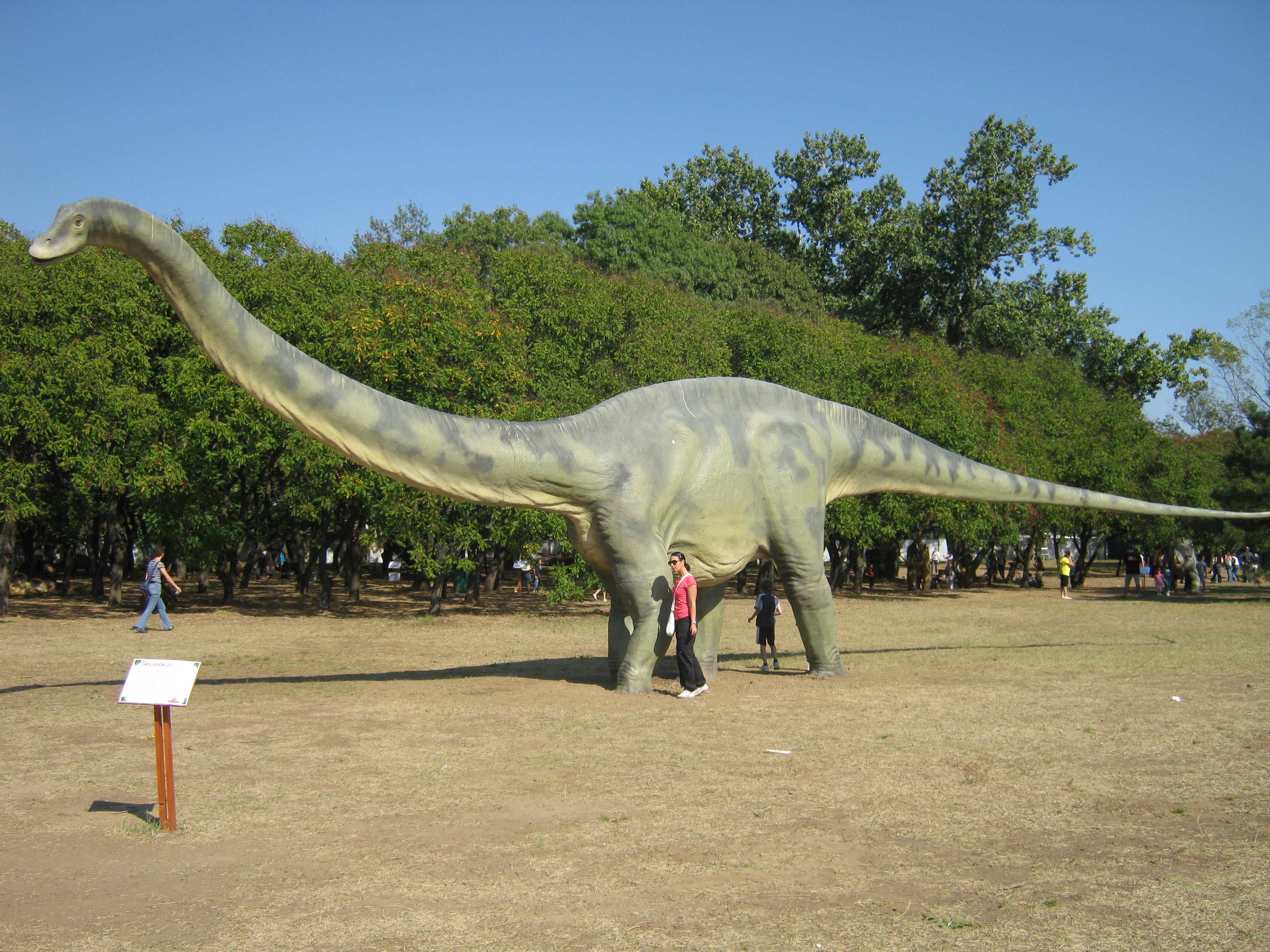 Sauropodomorpha ~ Diplodocus 10 Examples Of Reptiles