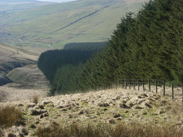 File:Forest edge, Clagberry Hill - geograph.org.uk - 379725.jpg