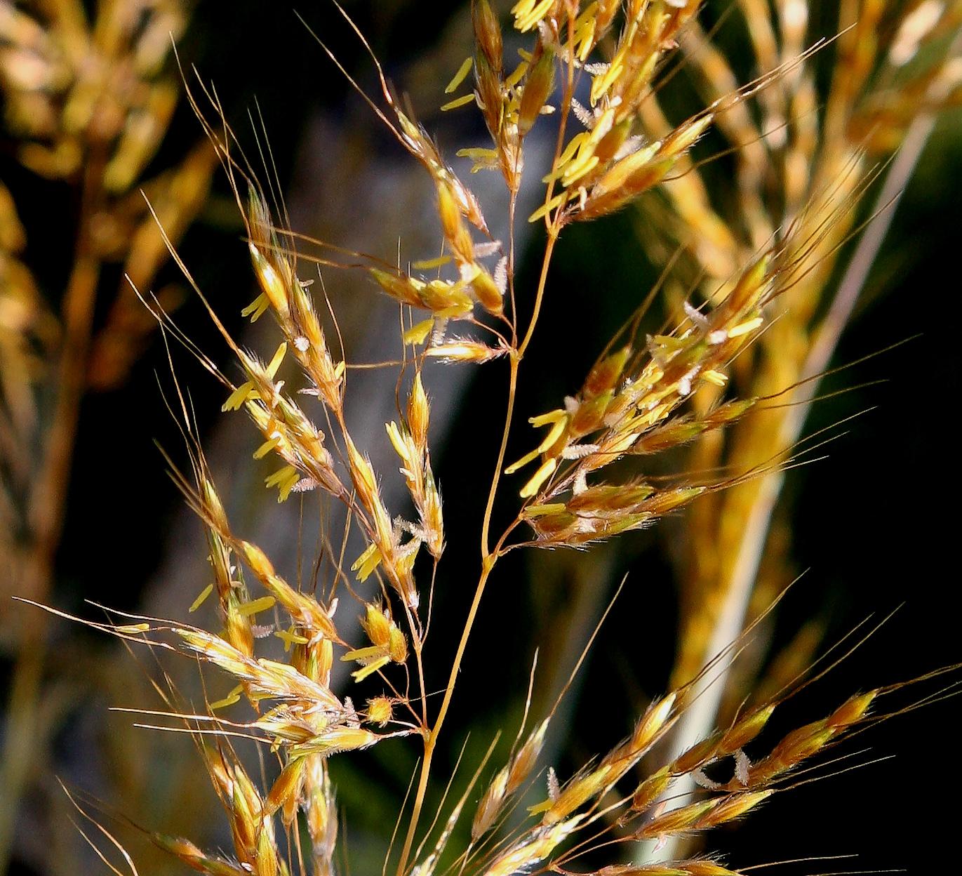 Grassflowers.jpg