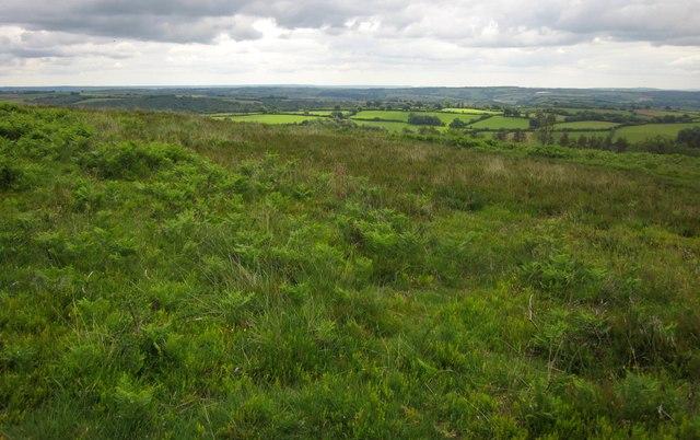 Heathland, Haddon Hill (geograph 3613267)