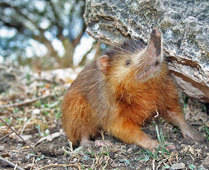 4100 Koleksi Gambar Binatang Yang Hidup Di Air Dan Darat HD Terbaru