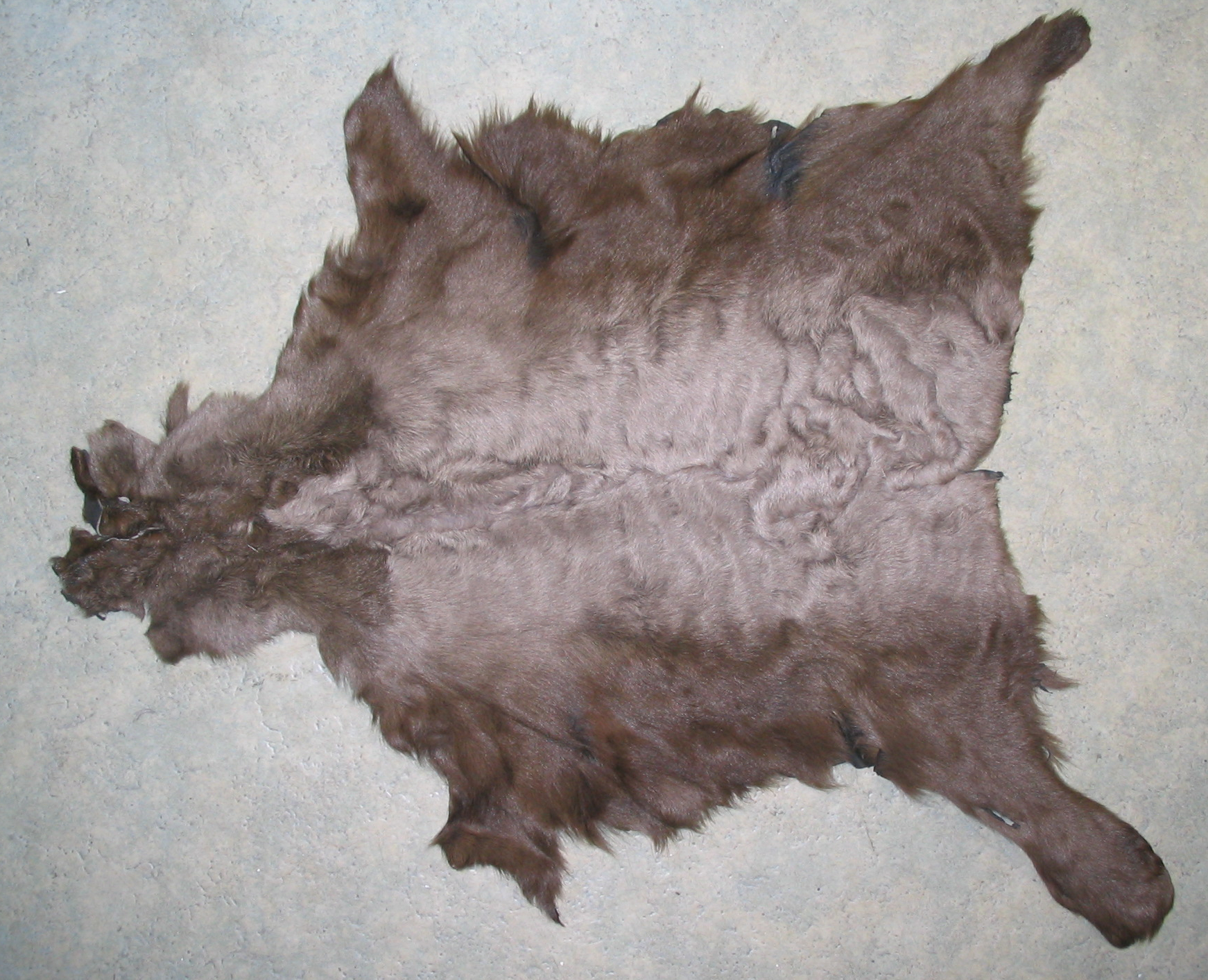 File Indian Lamb Fur Skin Sourire 4 Jpg Wikimedia Commons