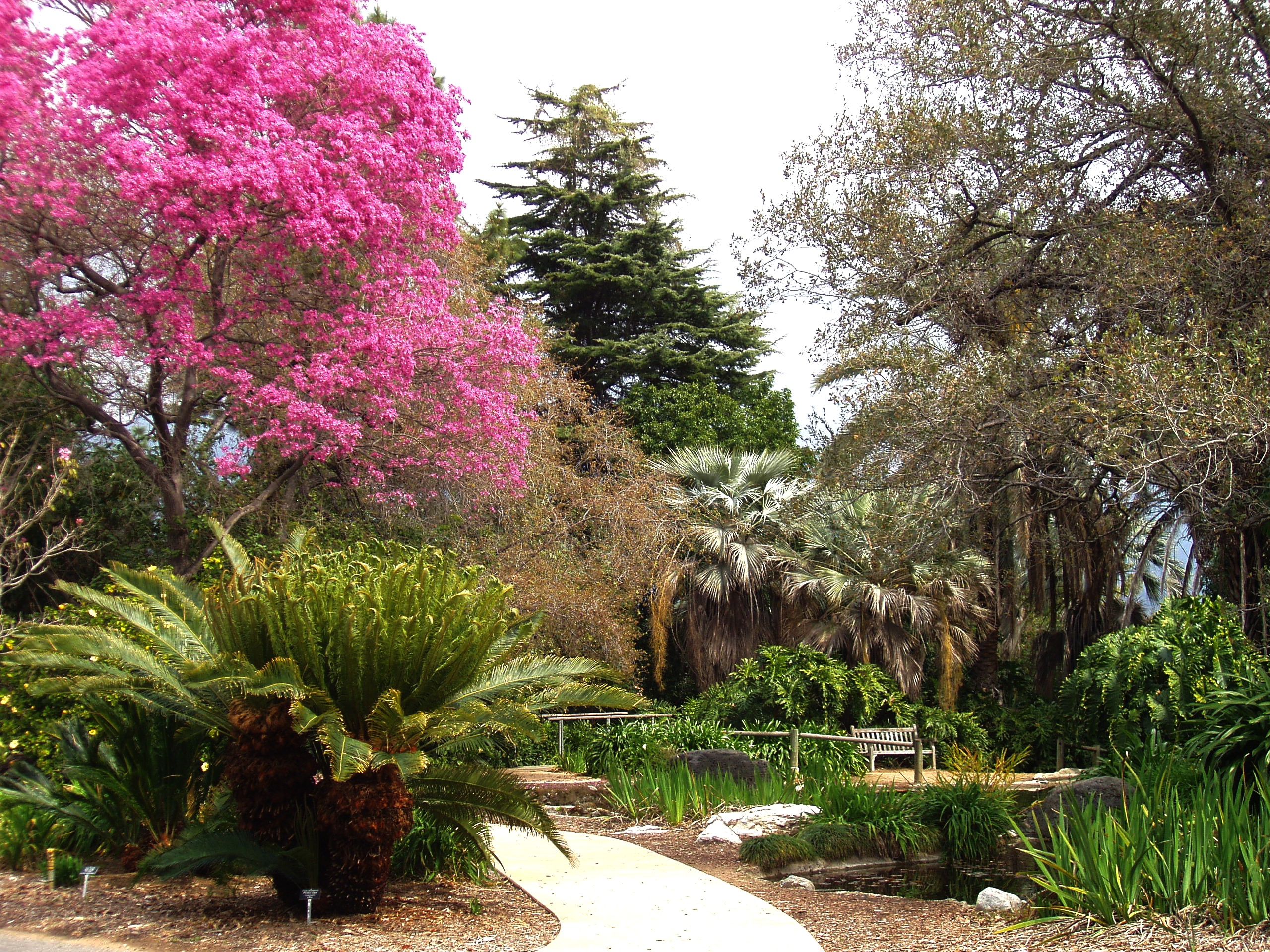 File La County Arboretum Knoll Jpg Wikipedia