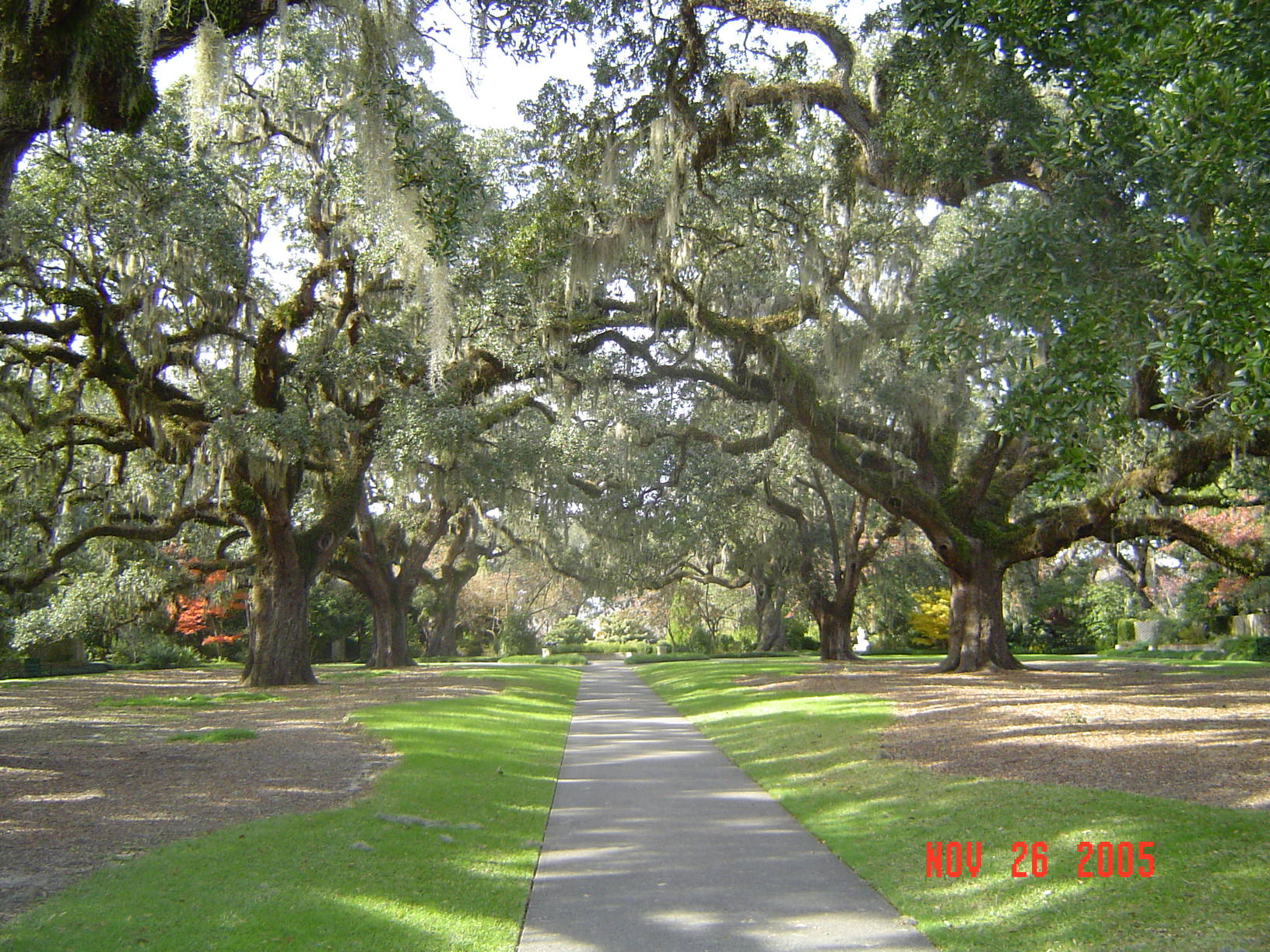 File:LIVE OAK Alley.jpg - Wikimedia Commons