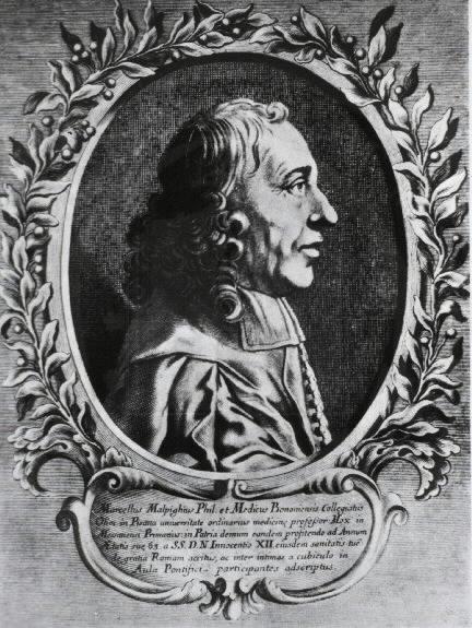 Depiction of Marcello Malpighi