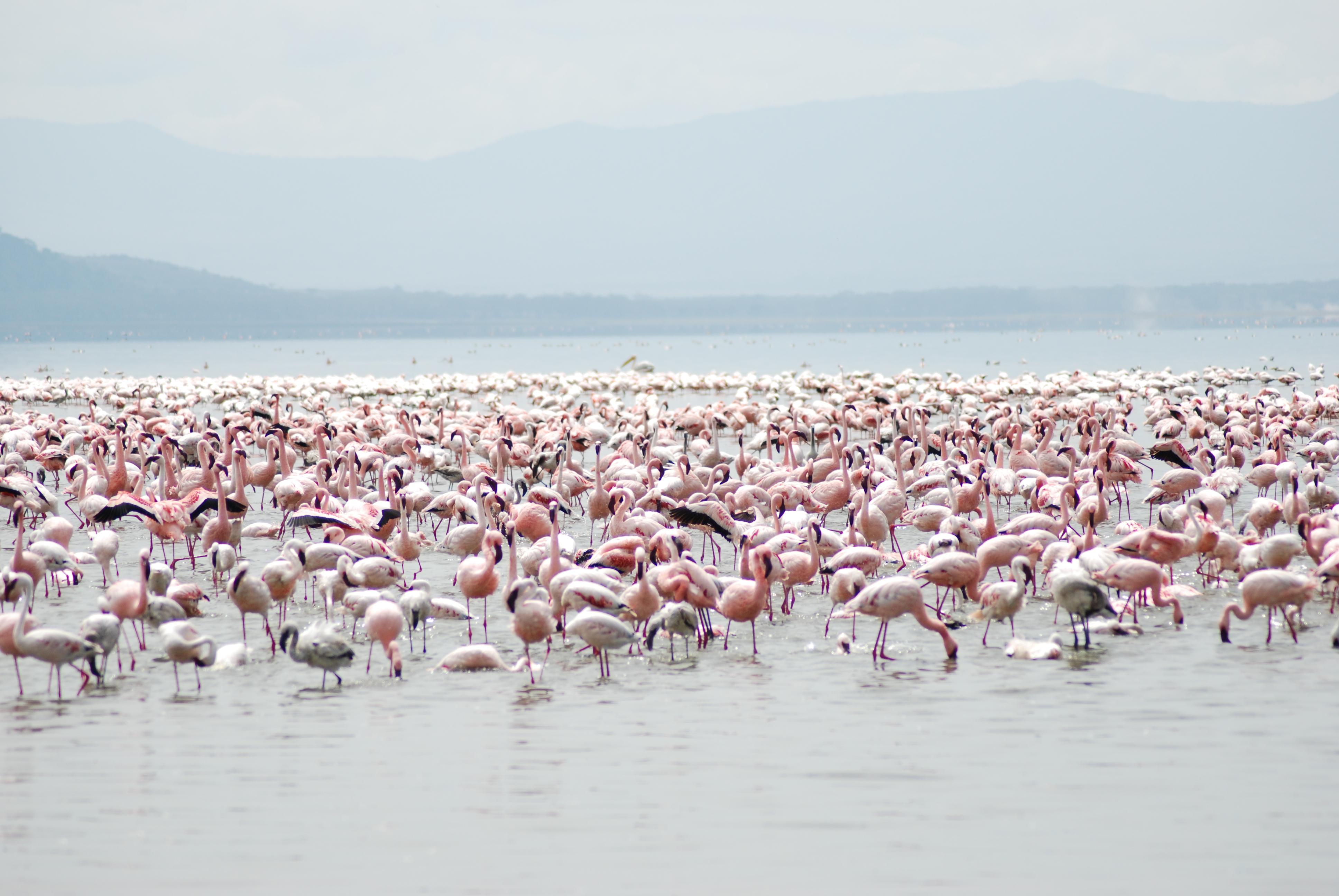 низкорослые фламинго на джербе фото отзывы столько надо