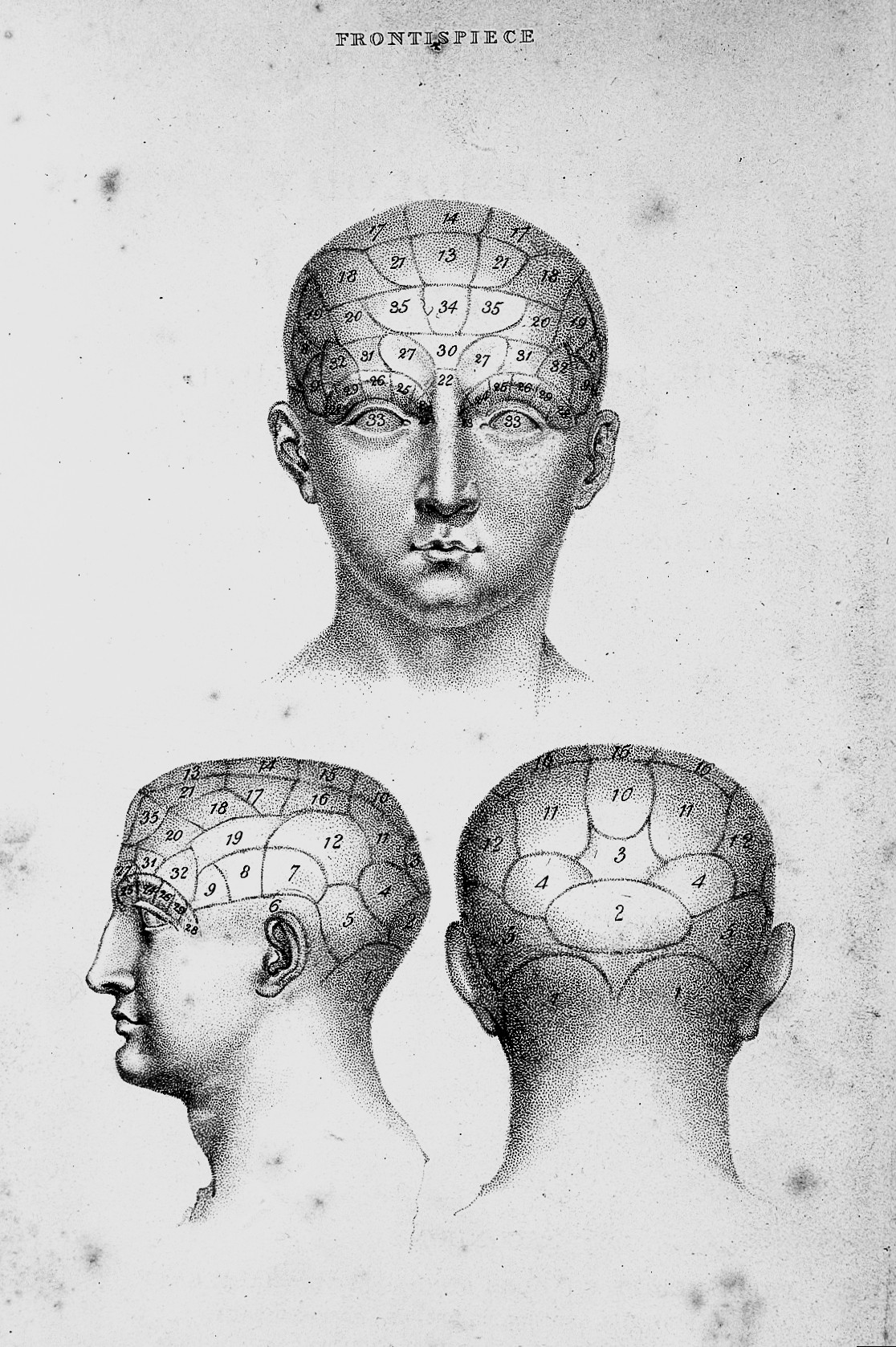 Head Size Conversion Chart: Numbered phrenological head 1825 Wellcome L0008290.jpg ,Chart