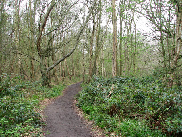 Path traversing birchwood - geograph.org.uk - 1249613