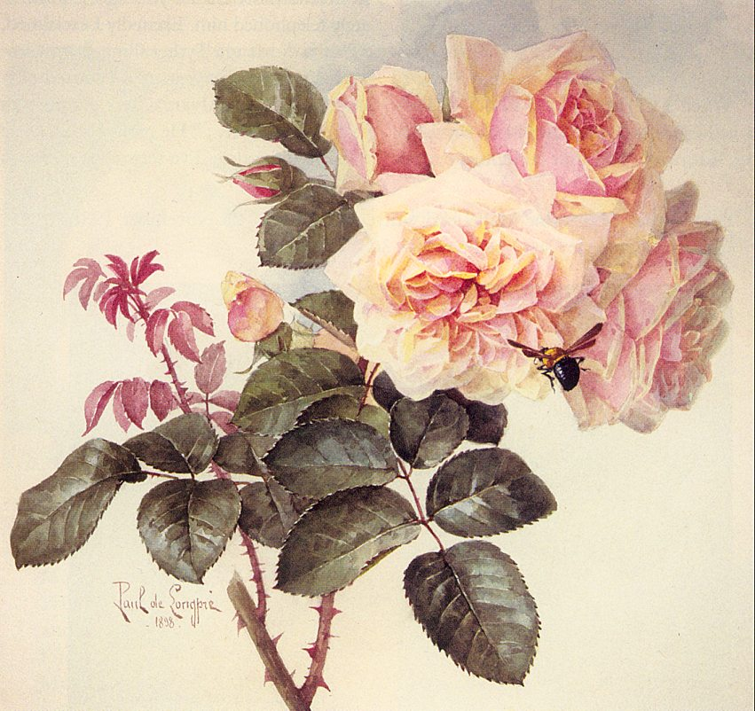 http://upload.wikimedia.org/wikipedia/commons/0/09/Paul_de_Longpr%C3%A9_-_roses_and_bumblebee%2C_1898.jpg